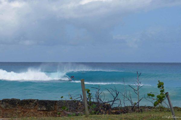 Barbados Barrel