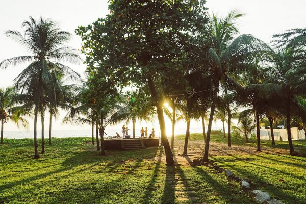 Eco Bay Palm Trees