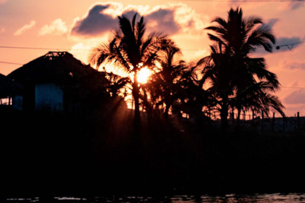Guatemala Sunset with Palm Trees