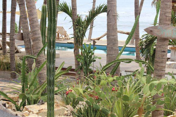 Mandla Pool Trees